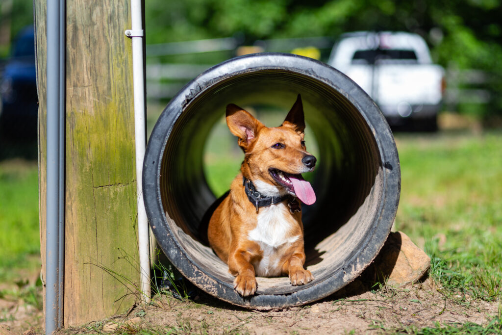 Dog in Tunnel