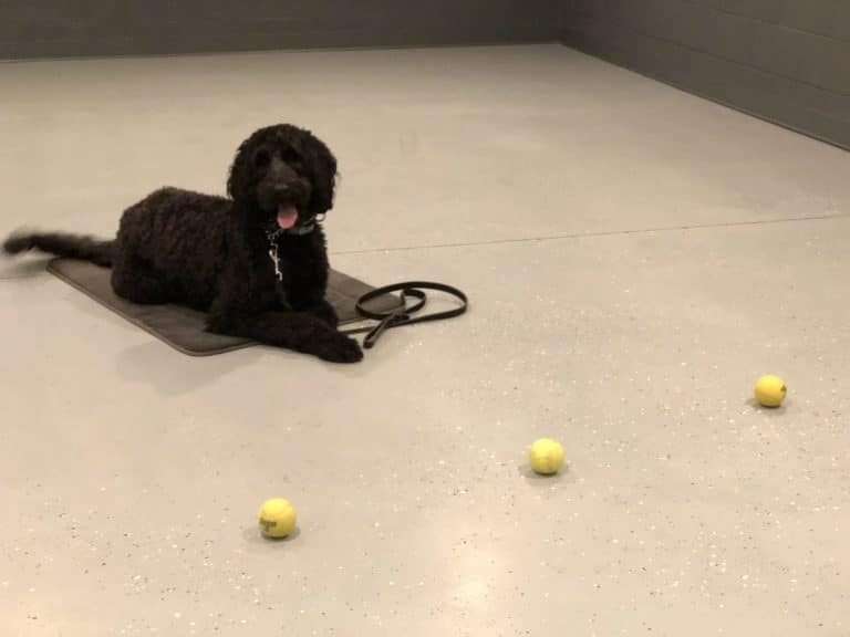Private Lessons or Group Classes for Dog Training: