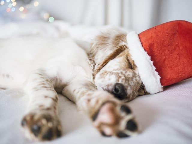 Take the Stress of your Dog during the holidays